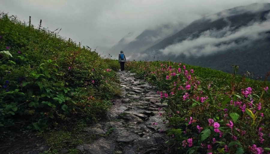 A Walk Into 'The Valley of Flowers' – Part II