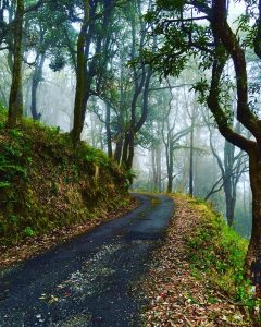 Binsar Wildlife Sanctuary Guide, Soul Trails