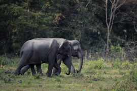 Manas National Park, Assam, Bodoland, Soul Trails