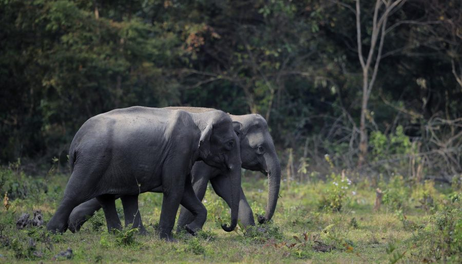 A Virgin's Experience of Manas National Park