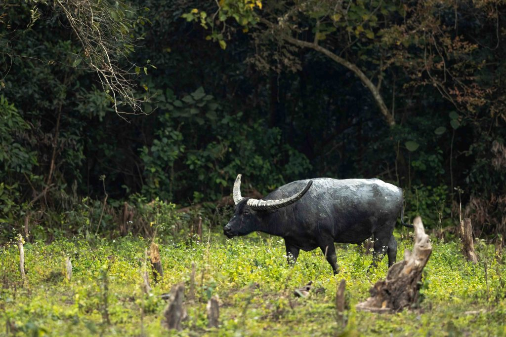 Manas National Park, Assam, Bodoland, Soul Trails